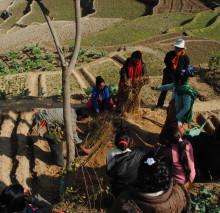 A farm in Nepal (Anabelle Harari '91)